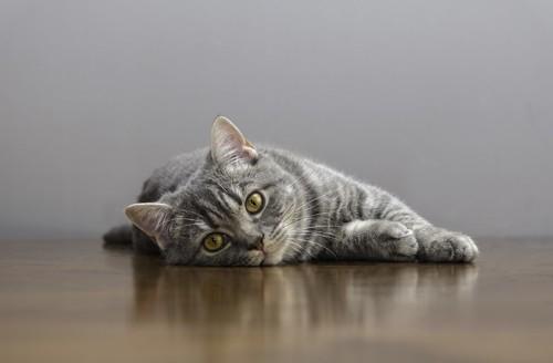 床に寝そべっている猫