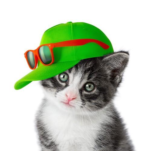 キャップを被る子猫