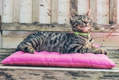ピンクのクッションの上で休む猫
