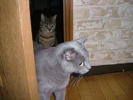 ドアに入る2匹の猫