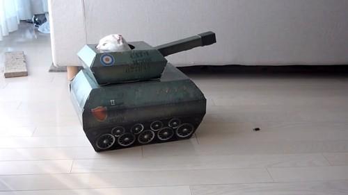 おもちゃの戦車から顔を出して後方を見る猫