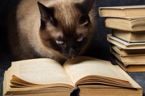 本を見ている猫