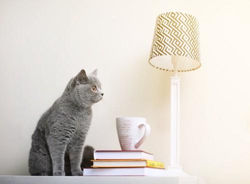 照明と本とグレーの子猫