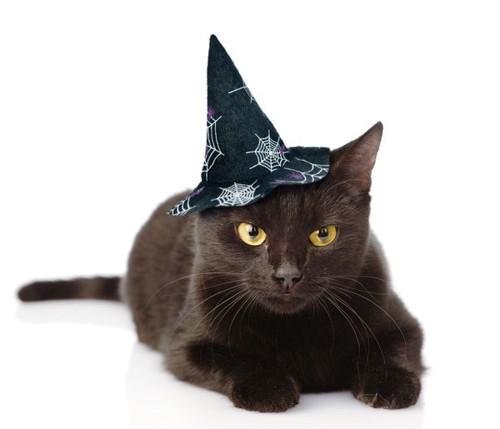 蜘蛛の巣柄の魔女の帽子をかぶった黒猫