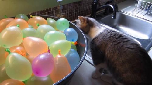 裏も見る猫