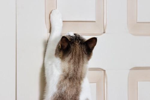 扉を開けようと手を伸ばす猫