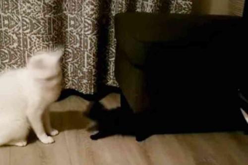 飛び出す子猫