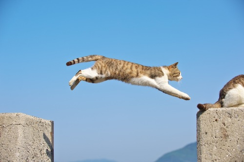 青空をバックにジャンプする猫