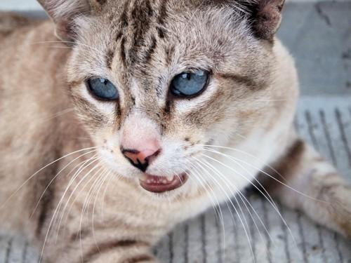 口呼吸の猫