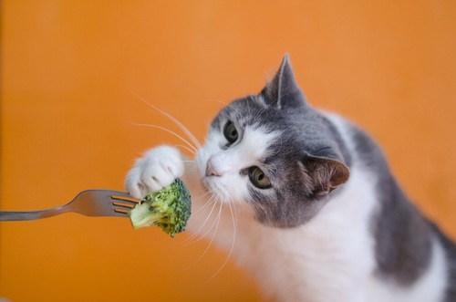 フォークに刺さったブロッコリーを食べようとする猫
