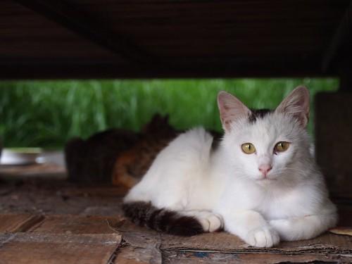 ベンチの下に入り込む猫