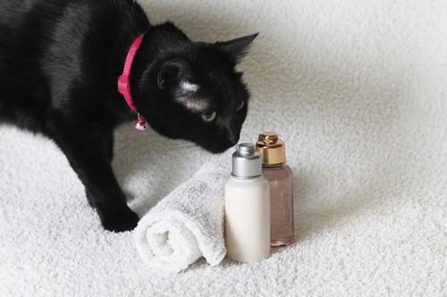 シャンプーのにおいをかぐ猫