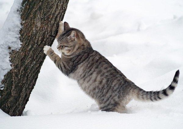雪の外で爪をとぐ猫