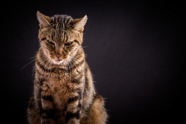 背景が暗く嫌な顔の猫