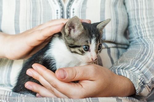 背中を撫でられる猫
