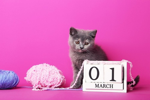 ピンクの背景と子猫とカレンダー