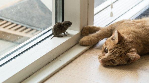 窓際の猫とネズミ