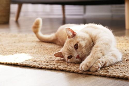 床で伸びをしている猫