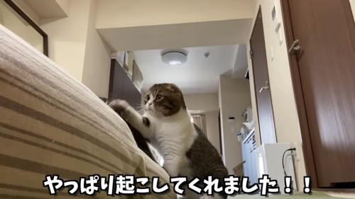 片方の前足を上げる猫