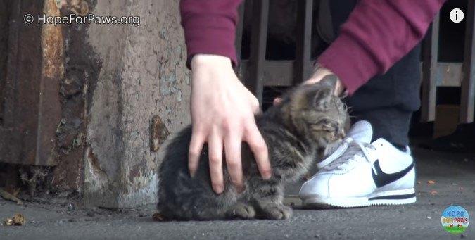 子猫を素手でつかまえる