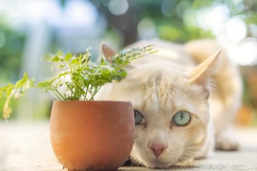 植木鉢の後ろに身をかがめる猫