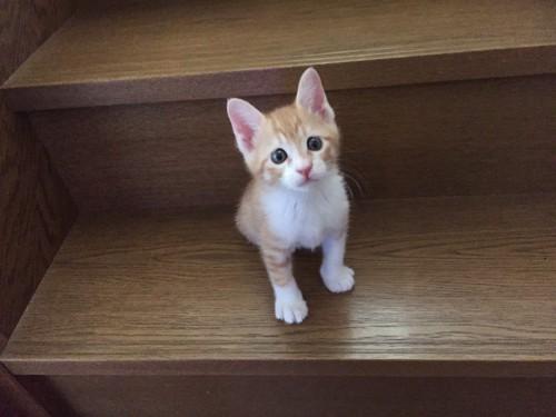 好奇心旺盛、少し大きくなると、階段もさっさと上っていく