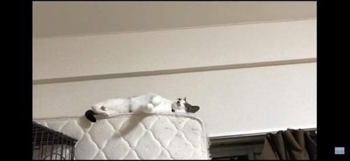 高い所で寝る猫