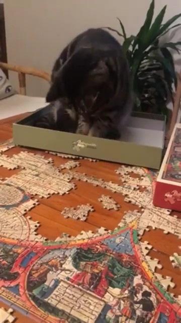 ピースで遊ぶ猫