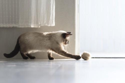 毛玉ボールで遊んでいる猫