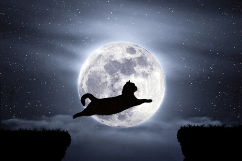 夜空にジャンプする猫