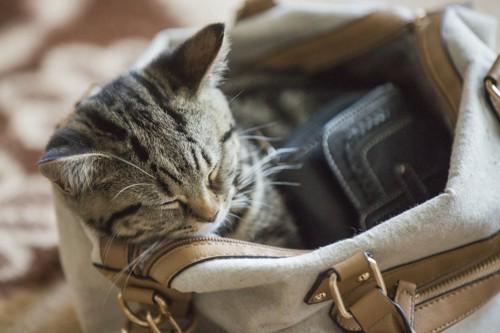 飼い主のカバンの中で眠る猫