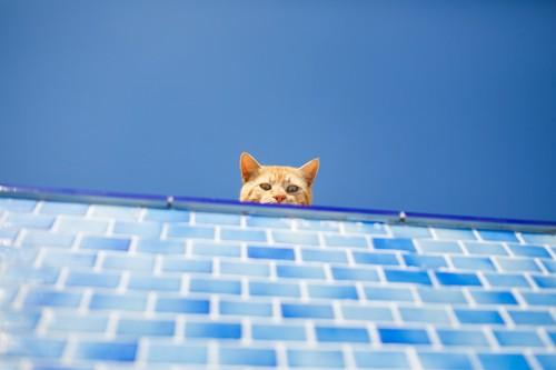 大空のもと水色の壁から顔を出す猫