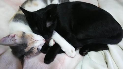 抱き合って眠る姉妹