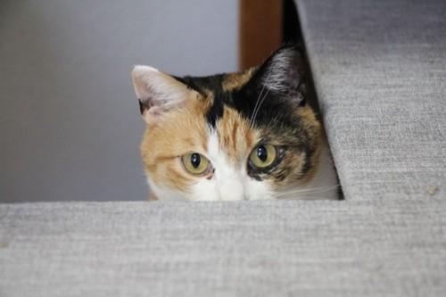 目から上だけ出している猫
