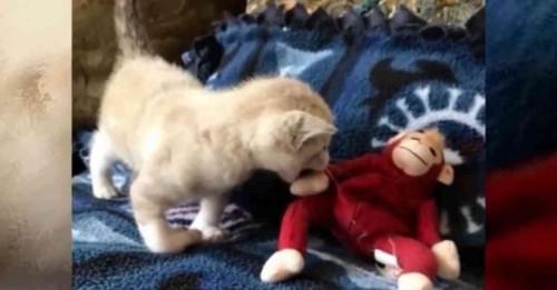 子猫とサルのぬいぐるみ