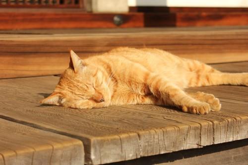 寝ている茶トラ猫