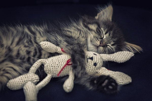 ウサギのぬいぐるみを抱き締める猫
