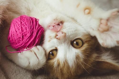 仰向けになって毛糸玉で遊ぶ猫
