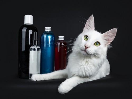 ボトル数本と白い猫