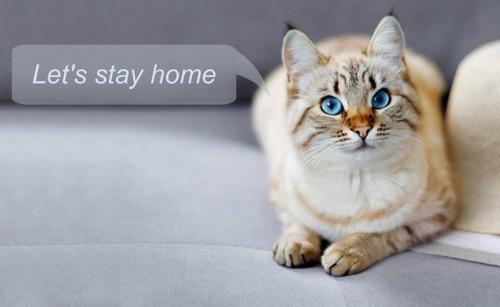 家にいて欲しいふきだしのついた猫