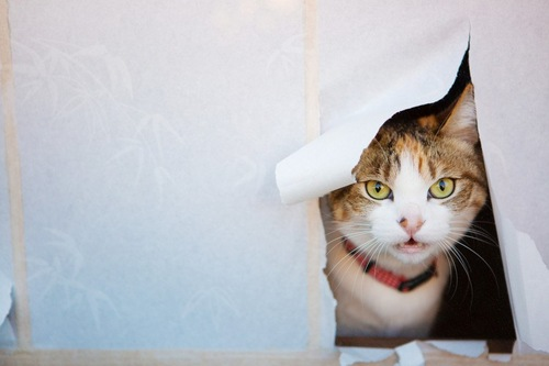 障子の穴から覗く猫