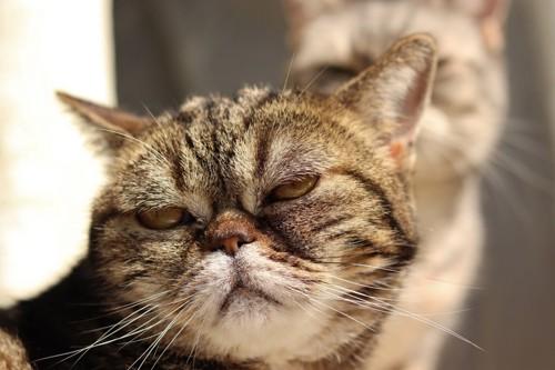 ふれくされた猫
