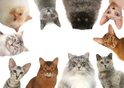 円形に並んだ複数の種類の猫の顔