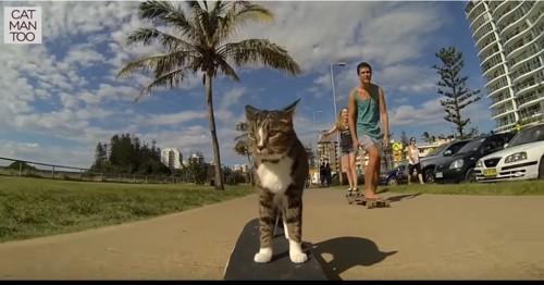 歩道でスケボーに乗る猫