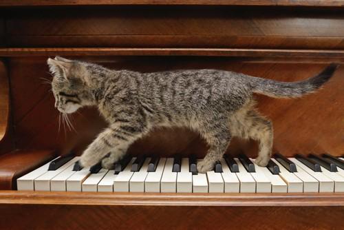 鍵盤の上を歩く子猫