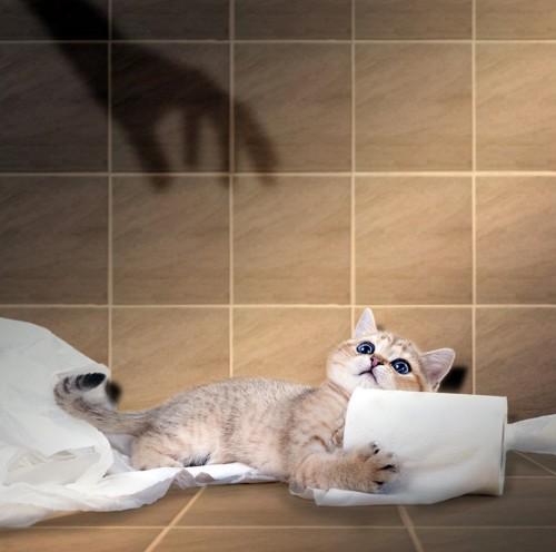 トイレットペーパーにしがみつく猫