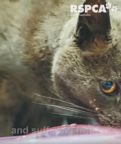 エサを食べる猫