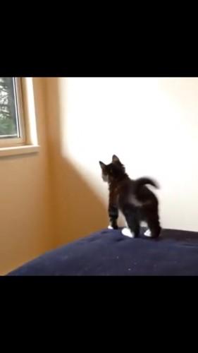 ジャンプしようと動く猫