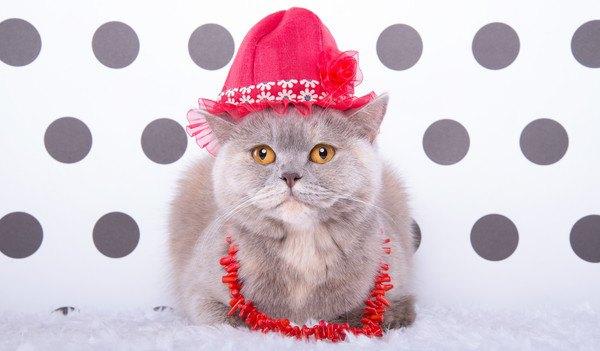 赤い帽子を被る灰色猫