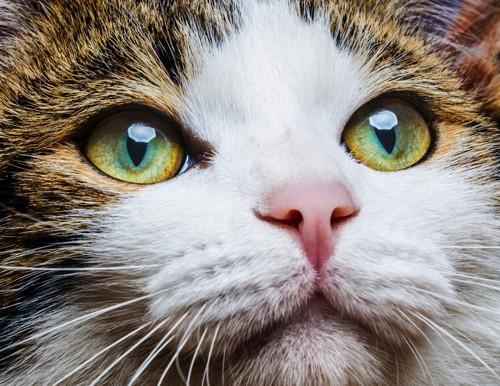 ヘーゼルの猫